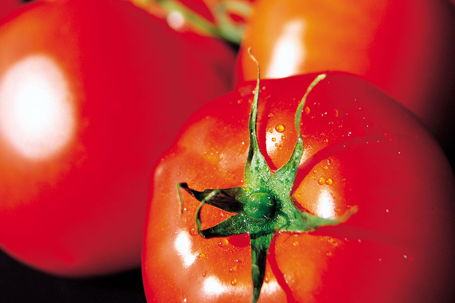 hauptkorn-tomaten